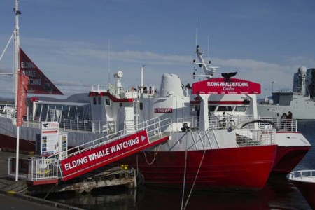 tours-in-reykjavik-whale-watching-iceland