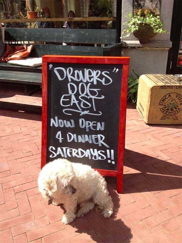 drovers dog amsterdam