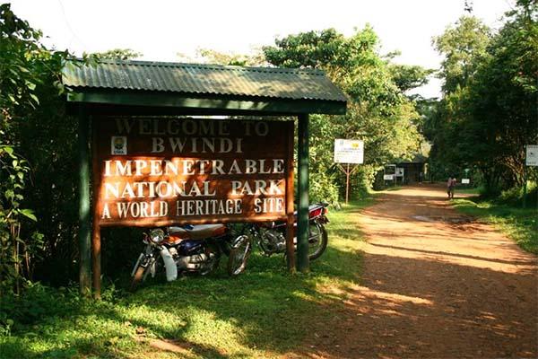 gorilla-tracking-uganda-1