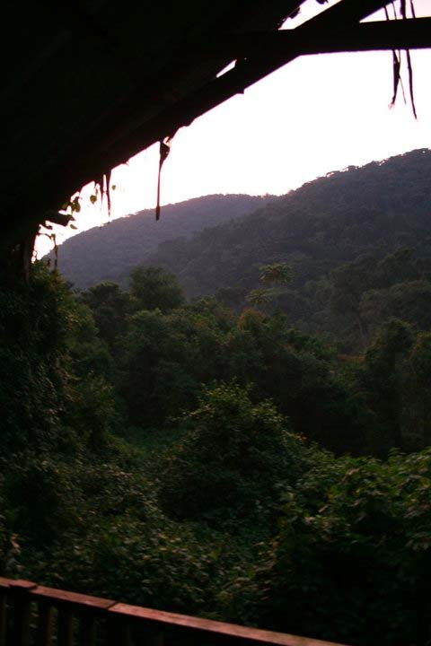 gorilla-tracking-uganda-5
