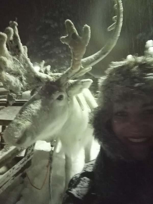 Reindeer safari Lapland