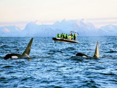 Whale safari norway