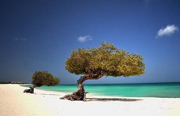 Aruba Eagle Beach
