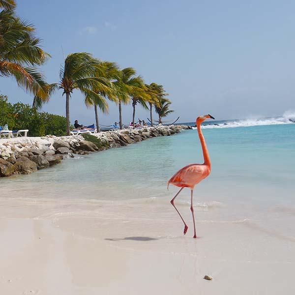 Flamingo Beach Most Beautiful Beaches In Aruba