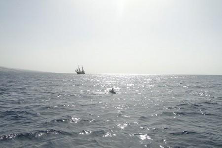 Dolfijn&Walvis Tour