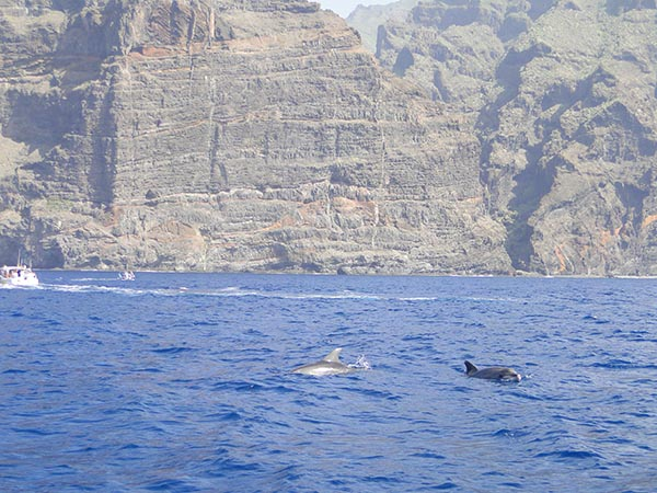 Dolfijn&walvis Tour Tenerife