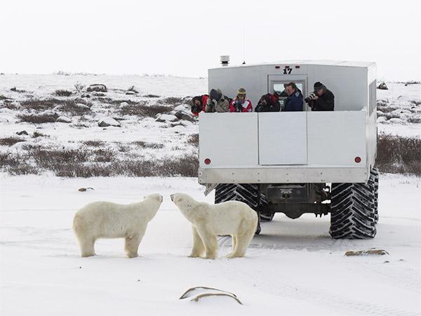 ijsberen-safari