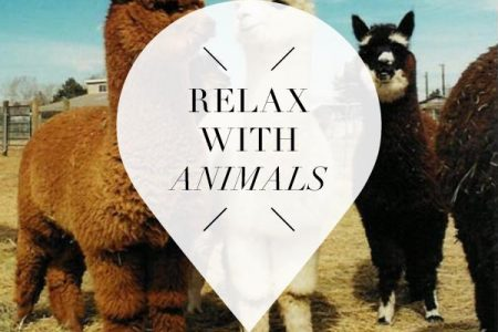 special activities with animals