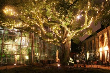 hortus by light amsterdam