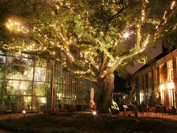 Botanische Tuin Amsterdam : Hortus by night amsterdam hortus botanicus