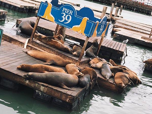 Pier39 San Francisco