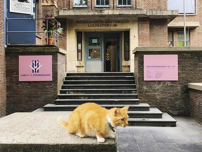 filmhuizen amsterdam
