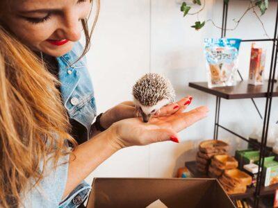 hedgehog cafe harry tokyo japan