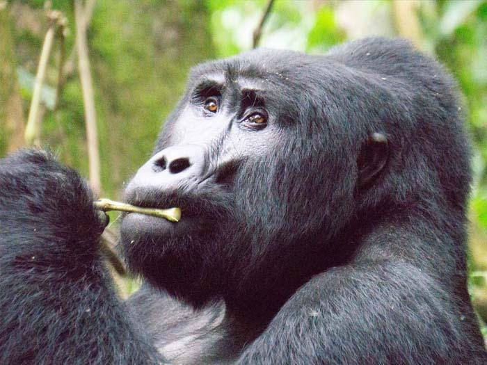 oeganda travel guide