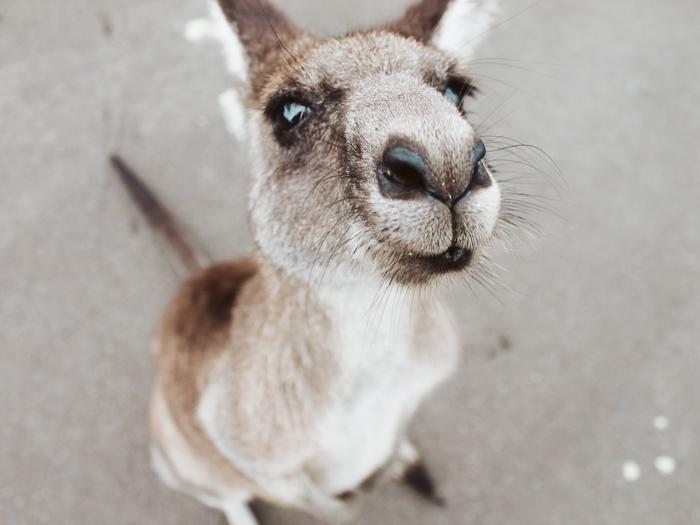 online visum aanvragen australië