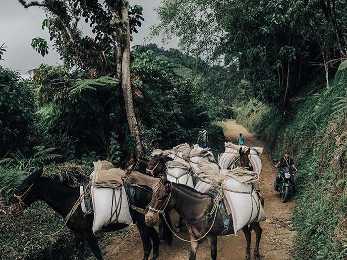 colombia foto koffie expositie