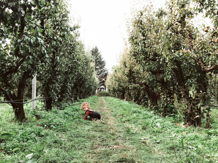 appels plukken omgeving amsterdam