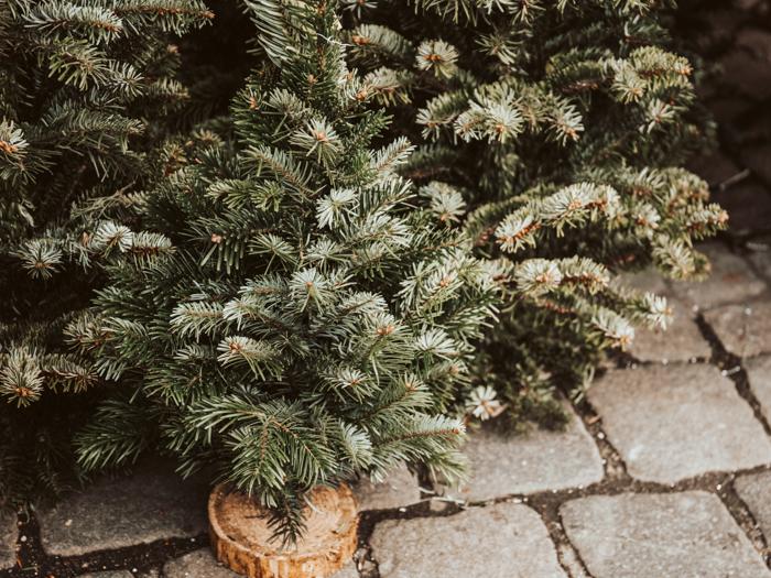 Waar koop je nu al een echte kerstboom? Christmas is not cancelled!
