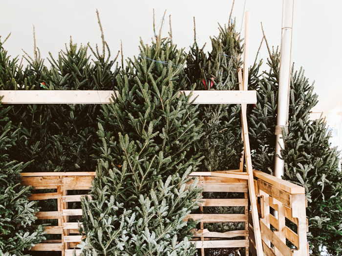 kerstboom farms nederland zelf kerstboom zagen