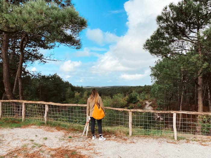 mooie wandelingen nederland